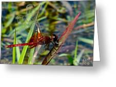 Crimson Dragon Greeting Card