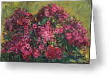 Crimson Phloxes Greeting Card