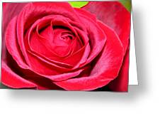 Crimson Red Rose Greeting Card by Karon Melillo DeVega