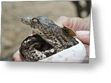 Crocodile And Alligator Breeding Farm  Greeting Card