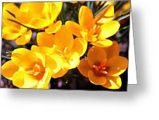 Crocuses In Yellow Greeting Card