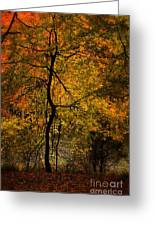 Crooked Tree At Beaver's Bend Greeting Card