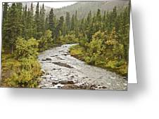 Crossing The Stream In Denali Greeting Card