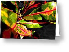 Croton Abstract I Greeting Card