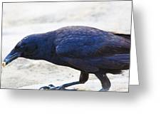 Crow Snacking Greeting Card