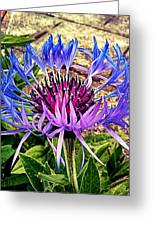 Crowned Beauty Greeting Card by Kevin D Davis