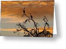 Crowned Cranes At Sunrise Greeting Card