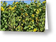 Crows In The Sunflowers Greeting Card