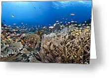 Crystal Bay Panorama Greeting Card