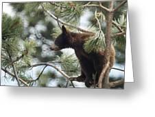 Cub In Tree Greeting Card