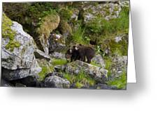 Cubs On A Rock Greeting Card