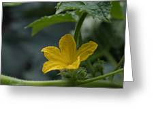 Cucumber Flower Greeting Card
