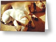 Cuddle Buddies <3 Kirby & Lola Greeting Card