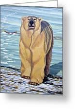 Curiosity - Polar Bear Painting Greeting Card