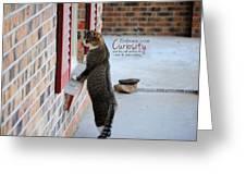 Curiosity Inspirational Cat Photograph Greeting Card