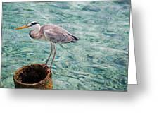 Curious Heron. Maldives Greeting Card