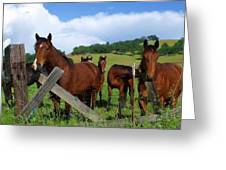 Curious Horses In Summer Greeting Card