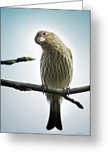 Curious House Finch Greeting Card