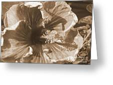 Curly Hibiscus In Sepia Greeting Card