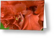 Curly Hibiscus Greeting Card