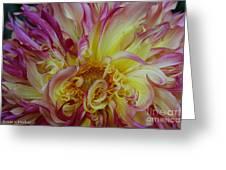 Curly Petals Greeting Card