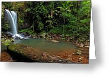 Curtis Falls - Mt Tamborine Greeting Card