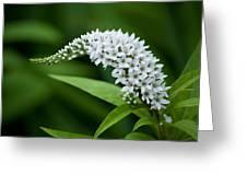 Curving Bloom Greeting Card