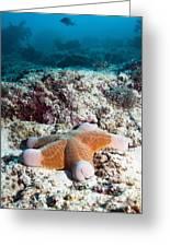 Cushion Star Starfish Greeting Card by Georgette Douwma