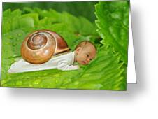 Cute Baby Boy With A Snail Shell Greeting Card by Jaroslaw Grudzinski