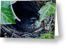 Cute Black Bird Mum Watching Over Her Eggs In Her Nest Greeting Card