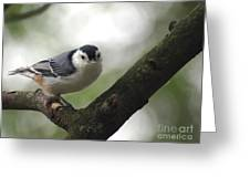 Cute Face Nuthatch Greeting Card