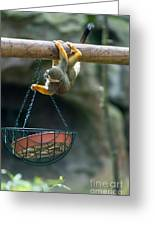 Cute Little Monkey Greeting Card