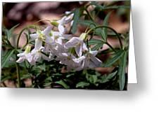 Cutleaf Toothwort Dspf048 Greeting Card