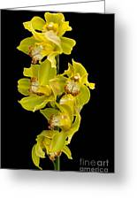 Cymbidium - Boat Orchid Greeting Card