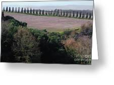 Cypress Allee Greeting Card
