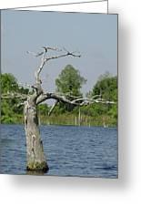 Cypress Alone Greeting Card