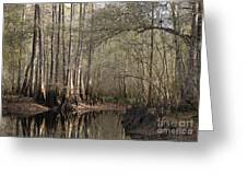 Cypress And Water Greeting Card
