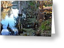 Cypress Knees And Trees Greeting Card