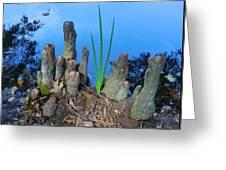 Cypress Knobs Greeting Card
