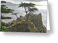Cypress Monterey Ca Greeting Card