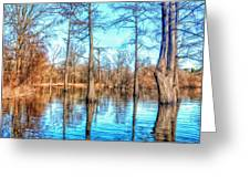 Cypress Swamp In Winter Greeting Card