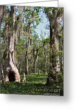 Cypress Trees And Water Hyacinth In Lake Martin Greeting Card