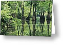 Cypress Trees Cross A Waterway Greeting Card