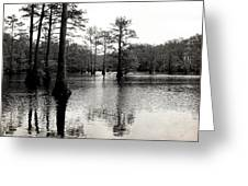 Cypress Trees In Louisiana Greeting Card