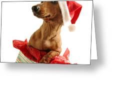 Dachshund Wearing A Santa Hat Greeting Card