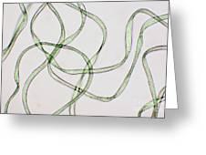 Dacron Fibers Greeting Card