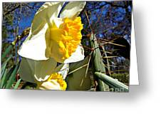 Daffodil And Cactus Greeting Card
