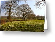 Daffodil Glade Greeting Card