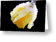 Daffodil In The Winter Snow Greeting Card
