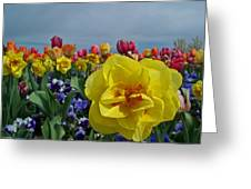 Daffodil Up Front Greeting Card